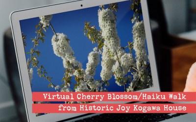 Virtual Cherry Blossom / Haiku Walk from Historic Joy Kogawa House