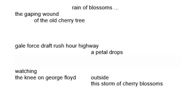 rain of blossoms … the gaping wound of the old cherry tree gale force draft rush hour highway a petal drops watching the knee on george floyd outside this storm of cherry blossoms
