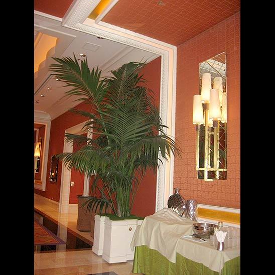 Kohala Nursery Inc.,  Kentia installed at Las Vegas Hotel