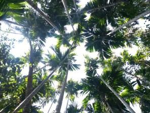 Grünes Goa