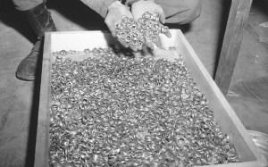 Cassa con le fedi in oro del bottino nazista