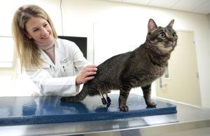 zampe stampate per vincent il gatto nato senza zampe