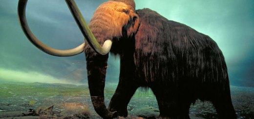 Mammut in Alaska si sono estinti per sete