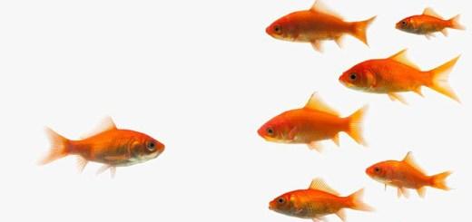Come comunicano i pesci? Cantano formando dei cori, sopratutto all'alba e al tramonto