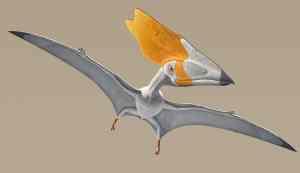 fossile di rettile alato Thalassodromeus pterosauro