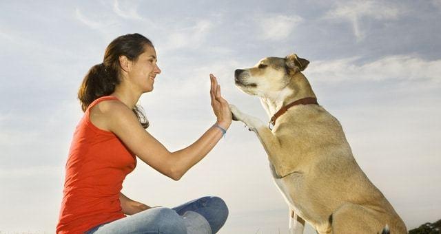 Cani dotati di memoria episodica quindi ricordano tutto quello che facciamo