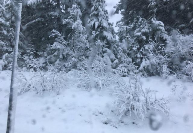 Snow coming down at Mt. Hood Meadows