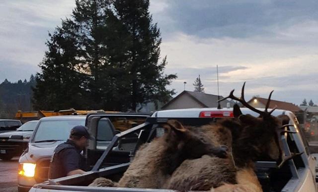 13 elk killed in Hwy 26 crash near Banks