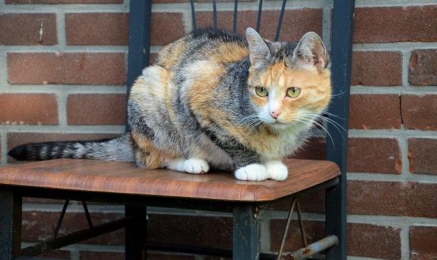 generic cat 03152018 pdp_1521156187864.jpg.jpg