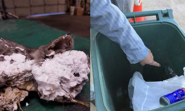 A kitten was found with spray foam in a trash can_1557952051132.jpg.jpg