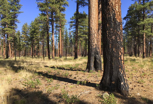 Wildfires Thinning Forests_1559237881759