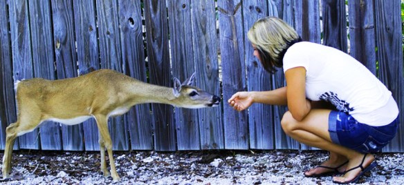 I didn't have any pics showing the relative size of Key Deer, so this one is courtesy of No Name Pub.