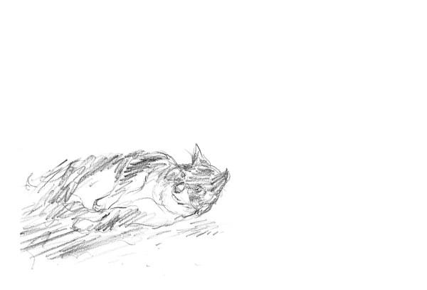 el-gato-que-miraba-las-estrellas03