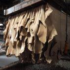 人に話したくなる革セミナー~革?皮?革素材はどう作られる?