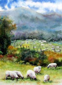 Owce napastwisku