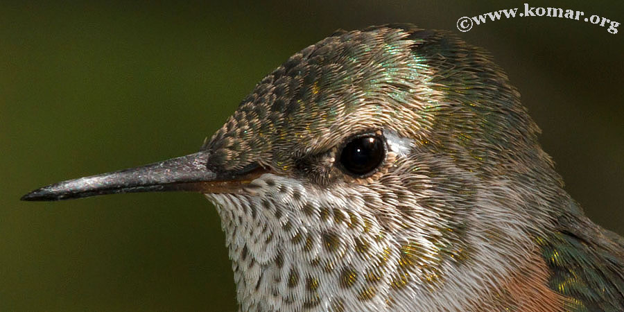 hummingbird nest 0624f