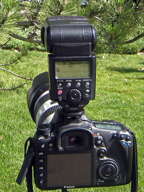 hummingbird nest camera setup 1