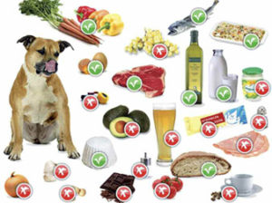 dieta esclusione cani