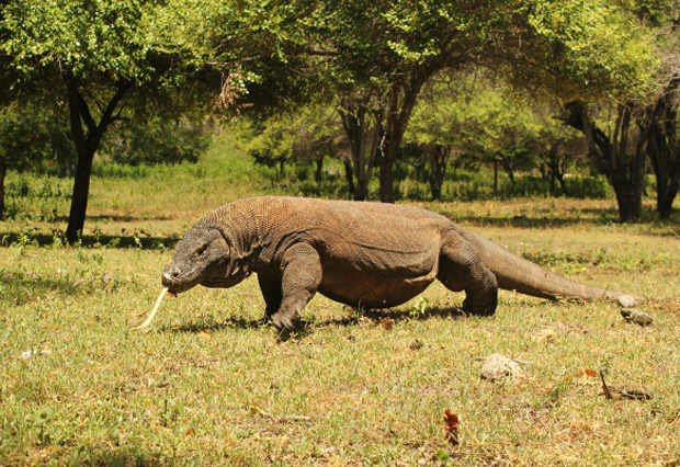 KOMODO TOUR 2 DAYS