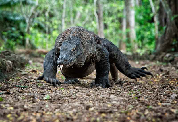 KOMODO TOUR 4 DAYS 3 NIGHTS