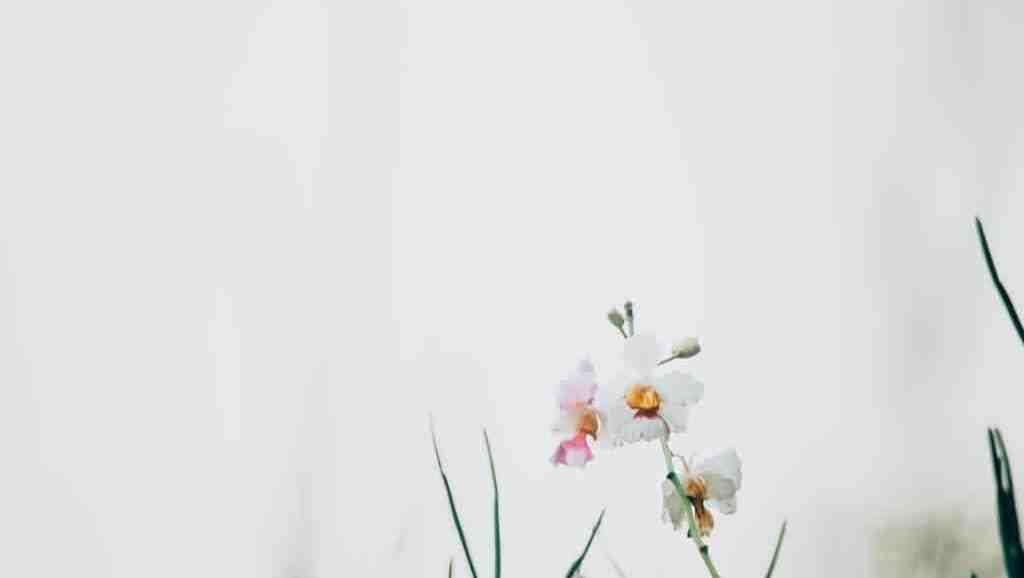 Fragiele bloem