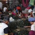 Perempuan Marunda: Pabrik Menggerogoti Hidup Kami (1)