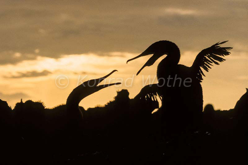 Galapagos Moments Of Nature Konrad Wothe