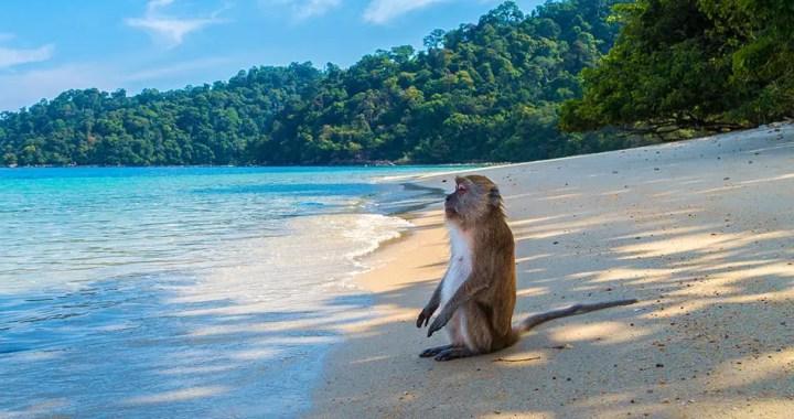 The Instant Gratification Monkey