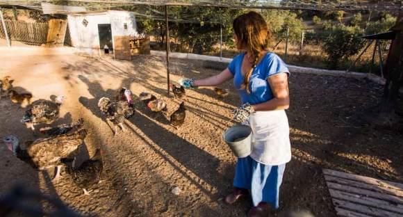 Ressourcen von Corporate Communications und Marketing wirksam streuen: Hühner füttern 3168520@freepik