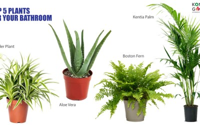 Top 5 Plants For Your Bathroom in Malaysia