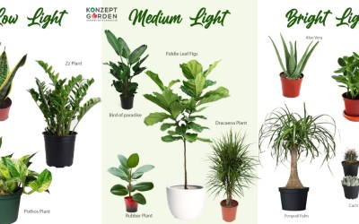 Three Ways To Get To Know Your Plants