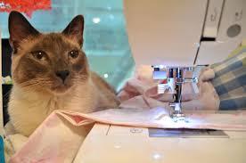 Cat quilting