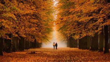 Gelsin Sonbahar, Hoş Gelmesin Ayrılıklar
