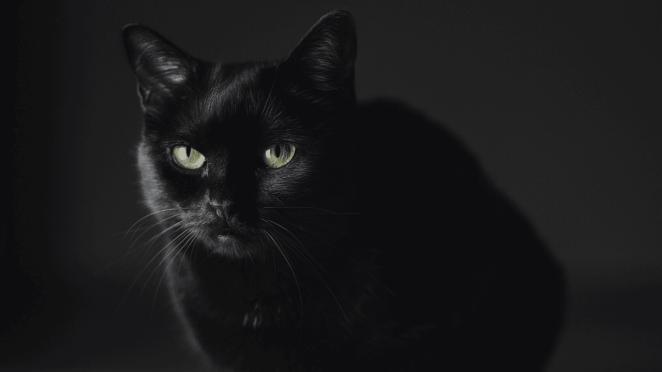Kara kedi uğursuzluk mu getirir?