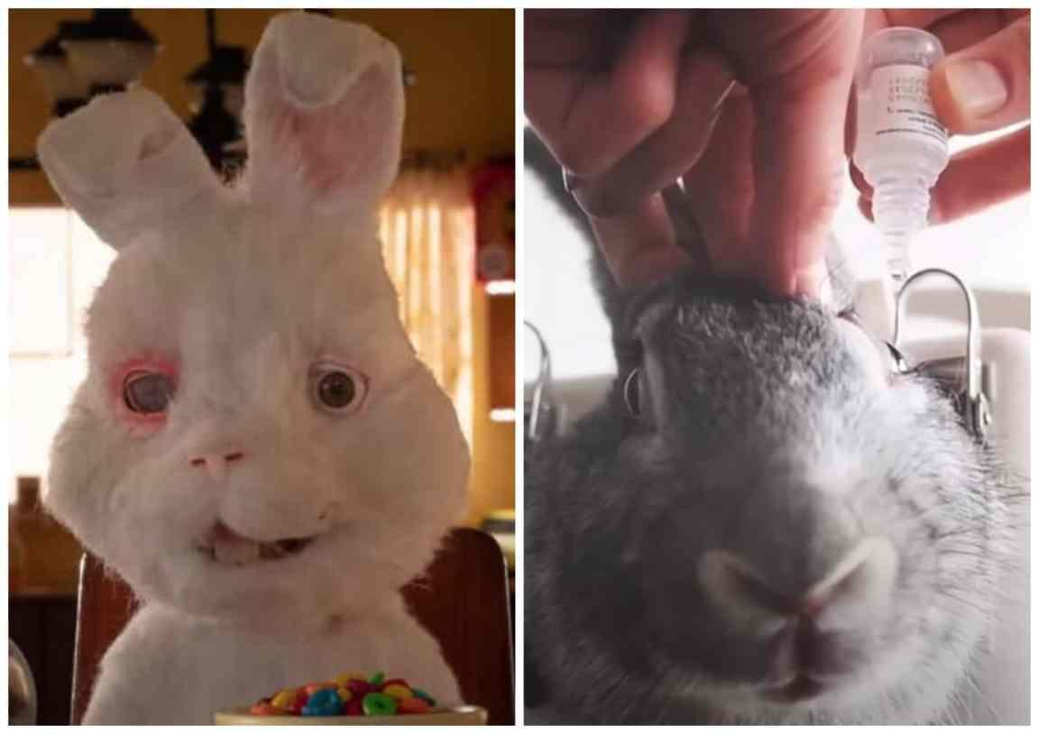 Save Ralph'in Gerçek Yüzü ve Tavşanların Deneylerde Kullanılma Nedeni