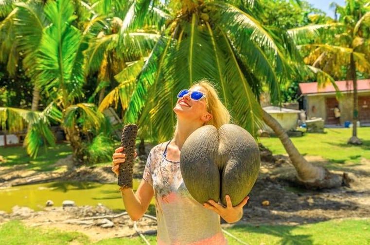 Coco de Mer: Kadın Kalçasına Benzeyen Nesli Tükenen Meyve Ağacı