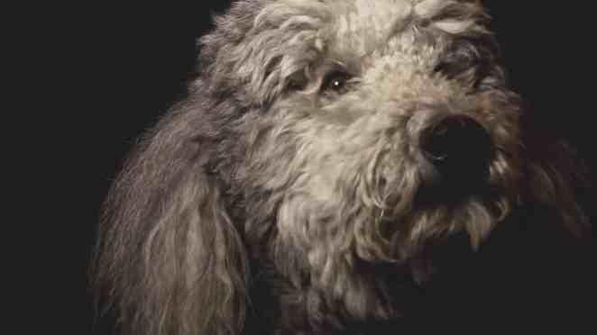 wendylucy Gelmiş Geçmiş En Popüler Köpek Filmleri