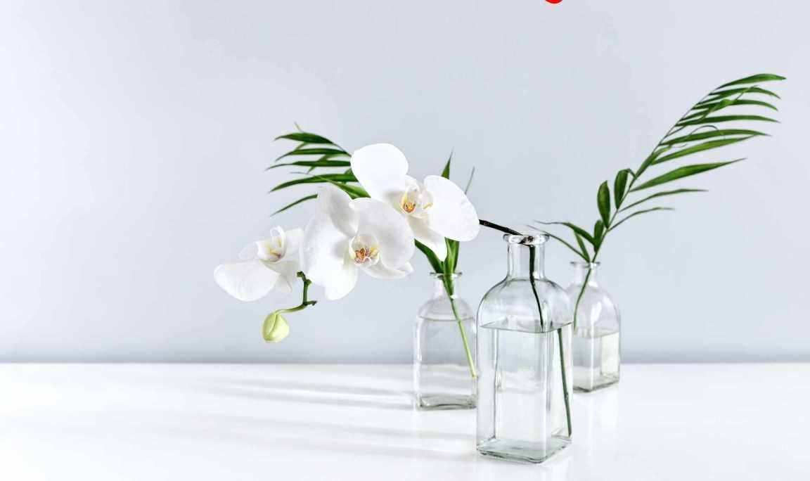 Orkide Bakımı Nasıl Olur Ve Nelere Dikkat Edilmelidir?