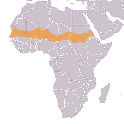 オレンジの帯がサヘル地域(ウィキペディア)