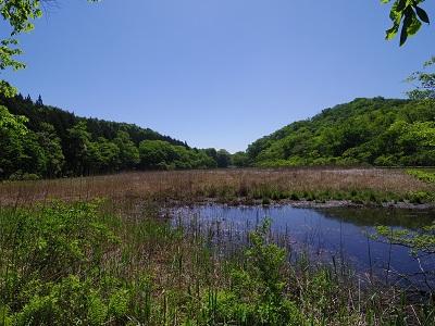 大沼園地の湿地帯