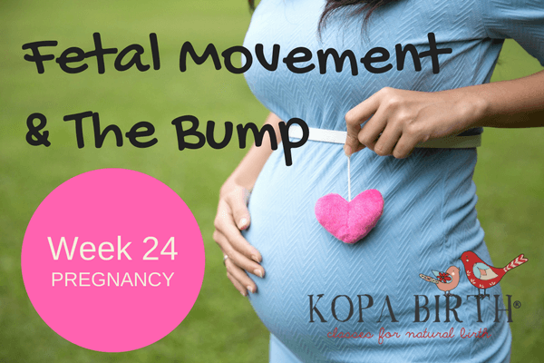 week 24 pregnancy fetal movement & the bump