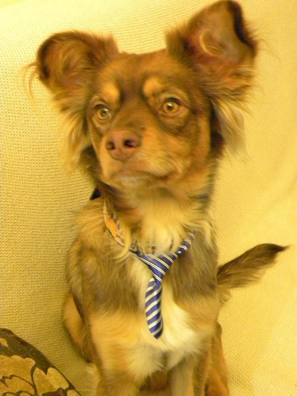 Τούρτα Καρότου - Σκύλος με γραβάτα