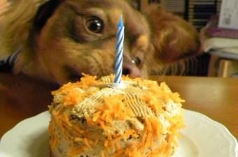 Τούρτα Καρότου για γενέθλια σκύλου