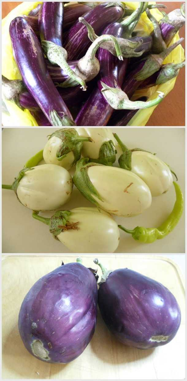 Variety of Greek eggplants image