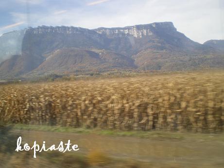 corn-fields1