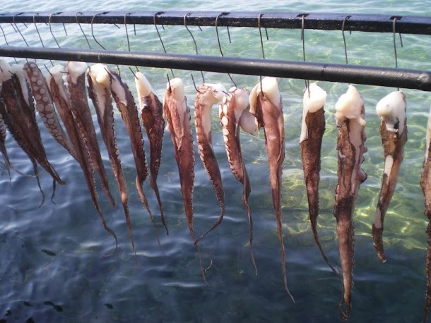 Evia octopuses drying image