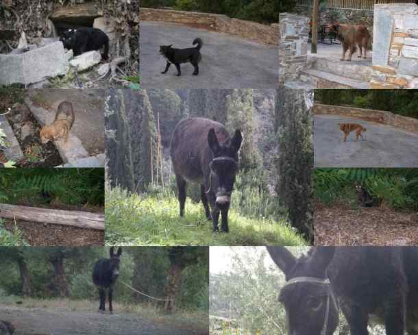 Collage Hymettus animals