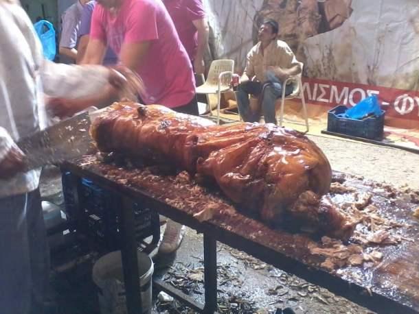 Succling piglet image