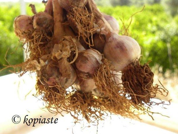 raw garlic image