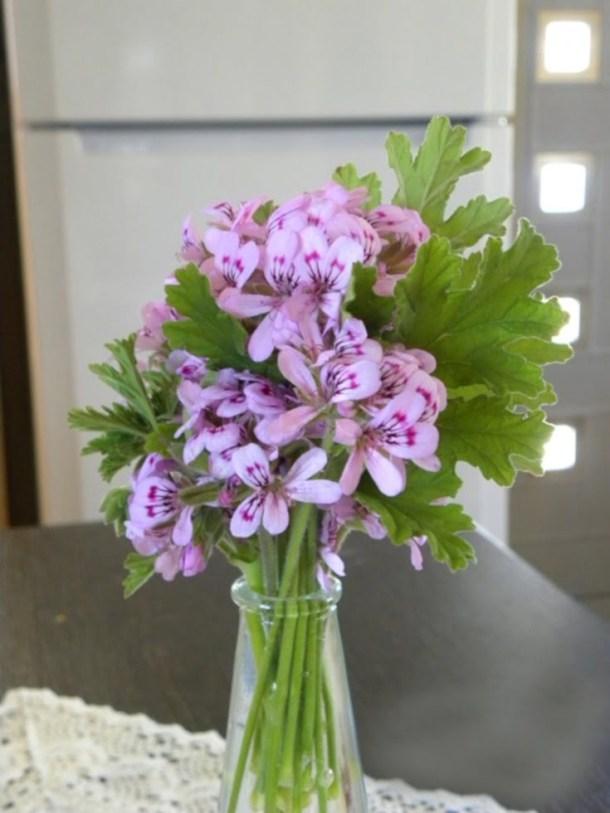 Fragrant geranium flowers image